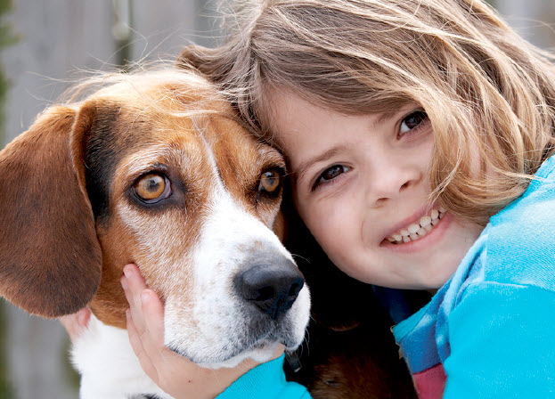 Beagle Dog Breed Info