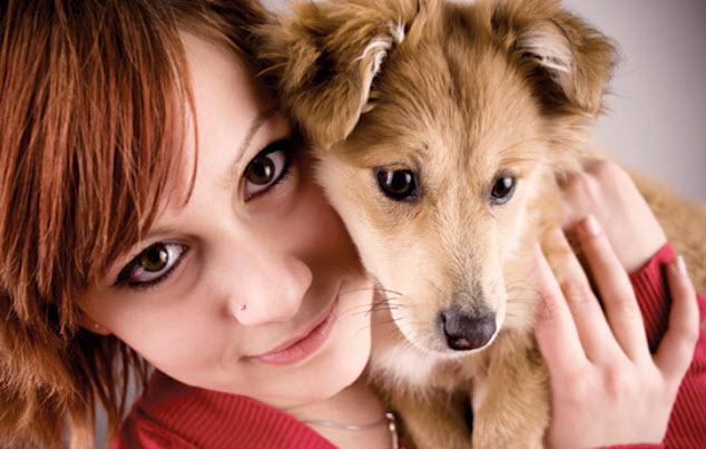 Medium Mixed Breed Dog Breed Info