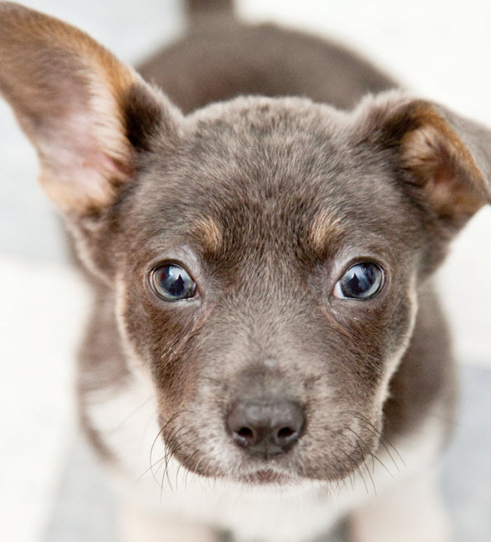 Small Mixed Breed Dog Breed Info