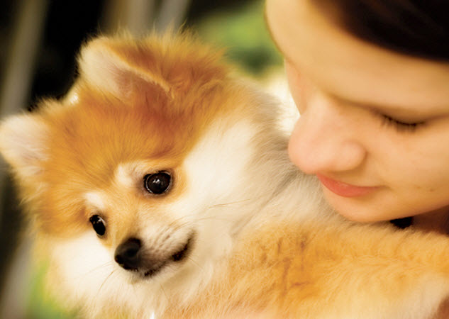 Pomeranian Dog Breed Info