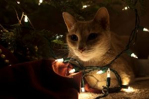 household items harmful to cats, Christmas lights